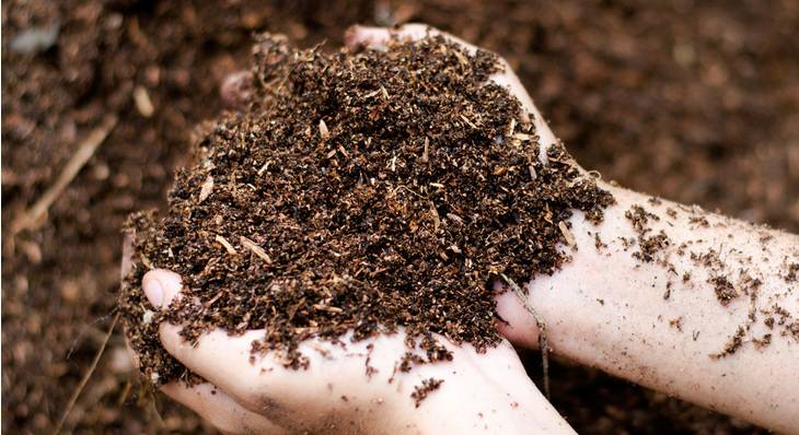 What Is Living Soil