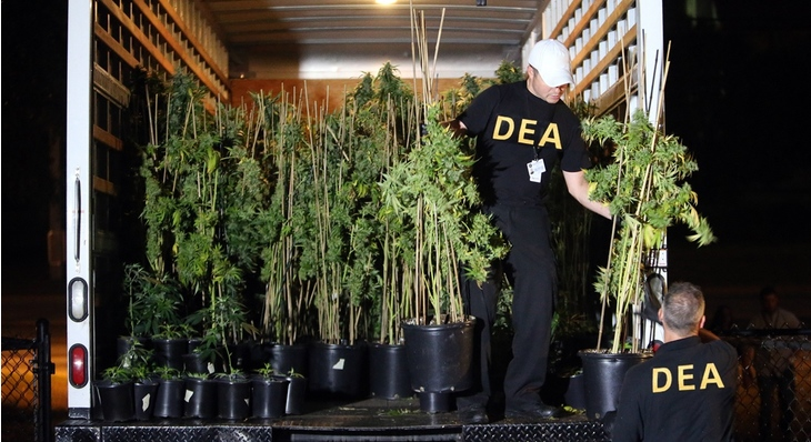Image result for dea and cannabis