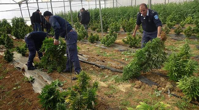 How Difficult Is It to Get Hashish in Palestine?