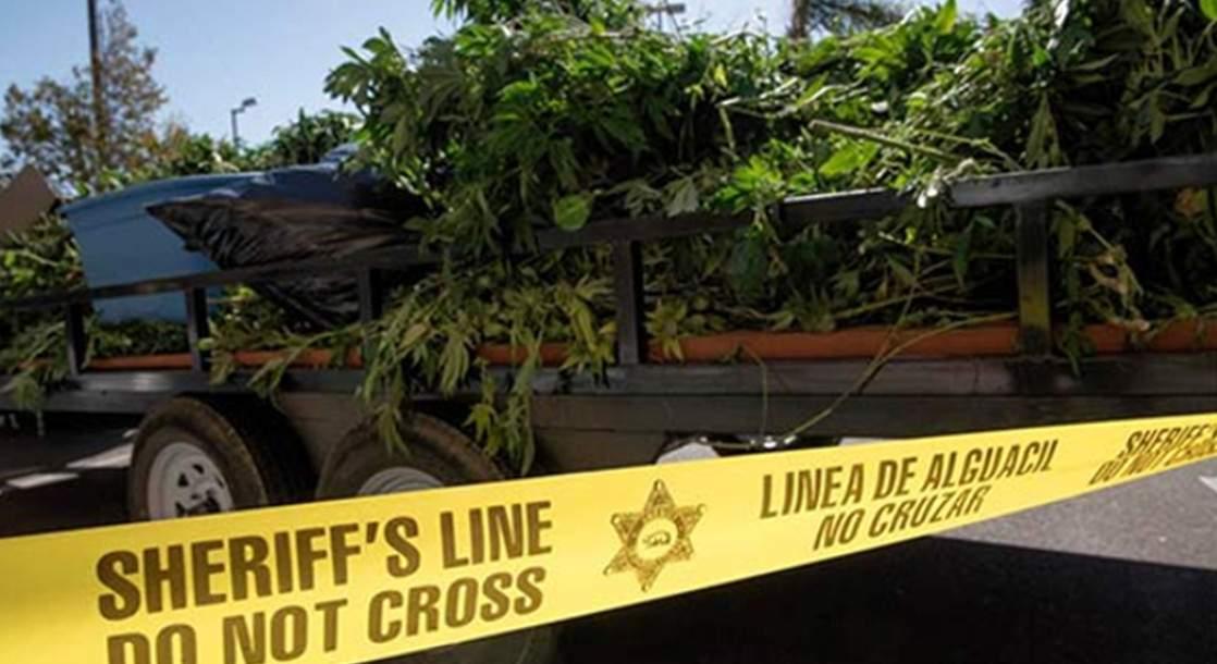 Marijuana Dispensary Task Force Seizes $7M in Marijuana and Edibles