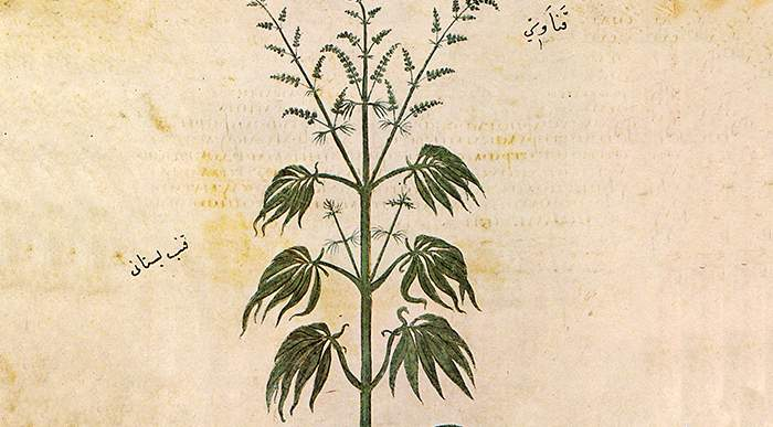 How Scientists Tested Cannabis Medicines in the Old Days