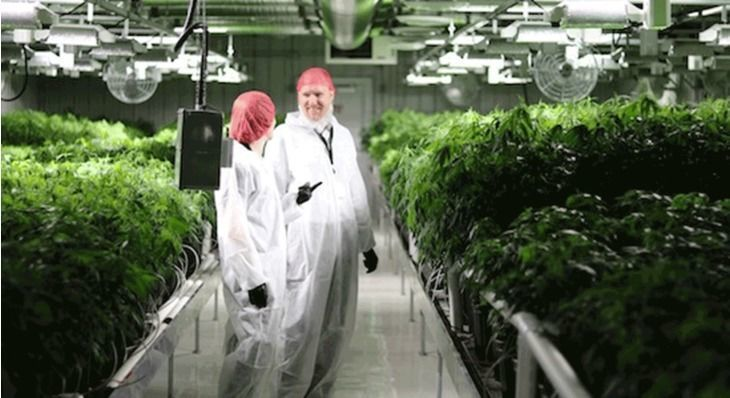 The World's Largest Cannabis Facility Has Broken Ground