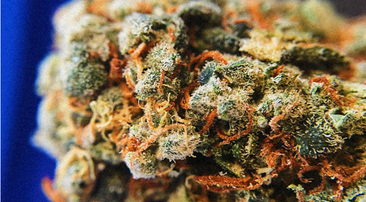 Fun Cannabis History Facts That Will Impress People