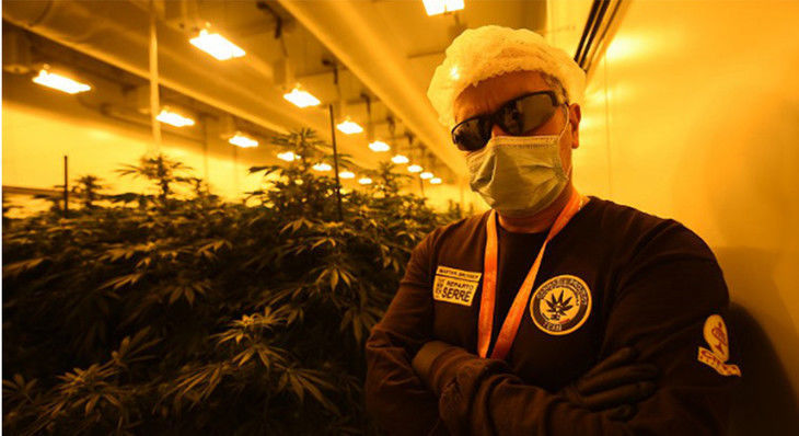 Italian Military Police Growing Medical Cannabis for Patients - MERRY JANE