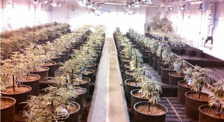 Some NorCal Cannabis Growers Think Taxes Might Put Them Out of Business
