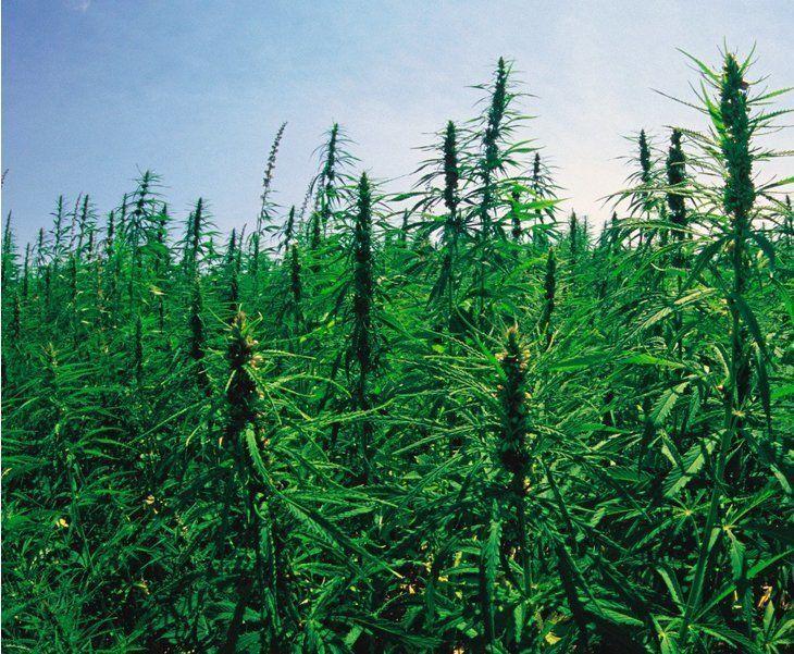 Colorado On the Verge of Restricting Home Grown Marijuana