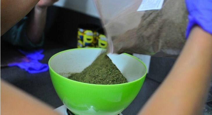 Cannabis Researchers Are Fed Up with the Ditch Weed Supplied by the Federal Government