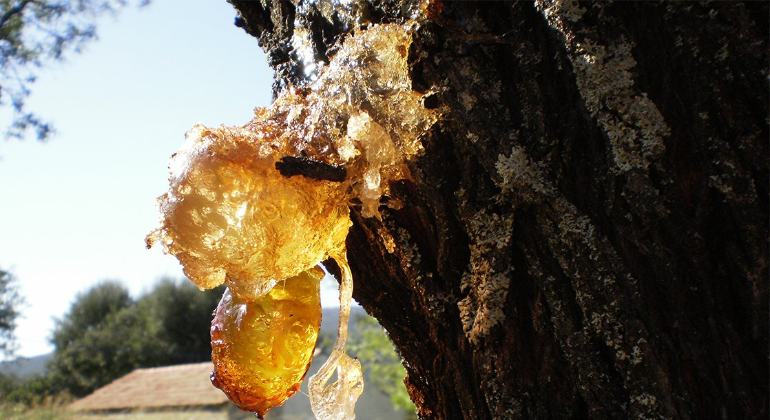 Resin vs. Live Resin vs. Rosin: What's the Difference?