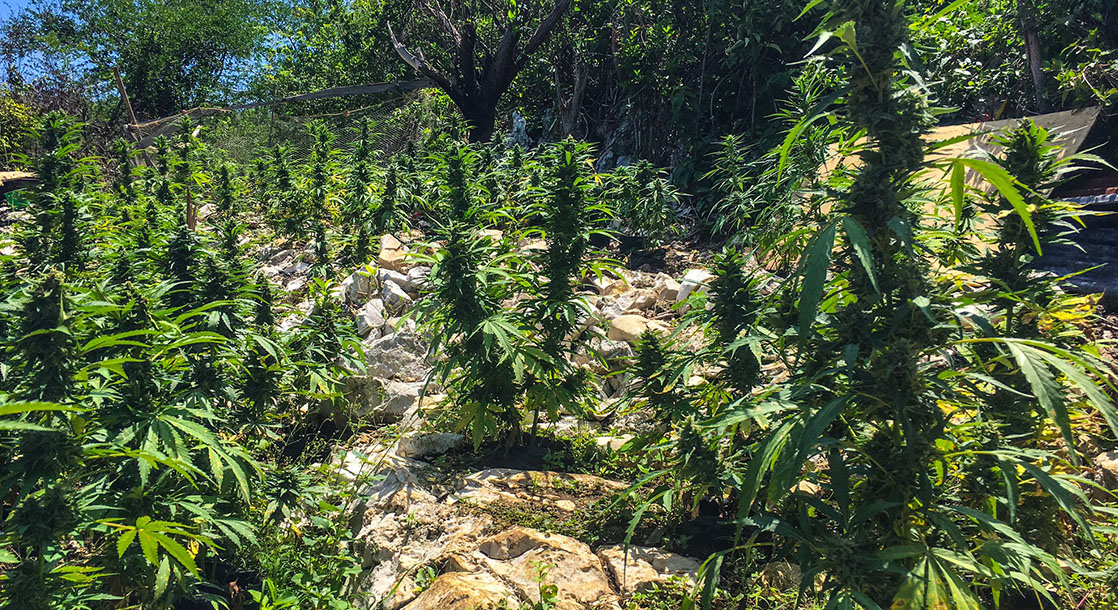 Day Tripping: Photos of Orange Hill, Jamaica's Marijuana Mecca