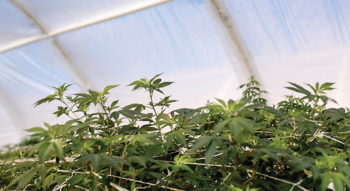 No Arkansas Businesses Have Applied for Medical Marijuana Licenses Yet