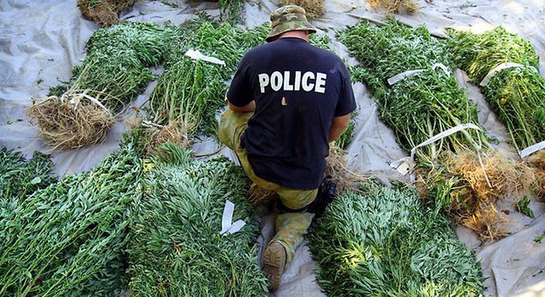Cannabis Plant Seizure Statistics Show Indoor Grow Ops Are an Increasing Trend in California