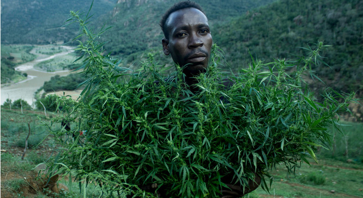 Cannabis Legalization Efforts Are Gaining Ground in Africa