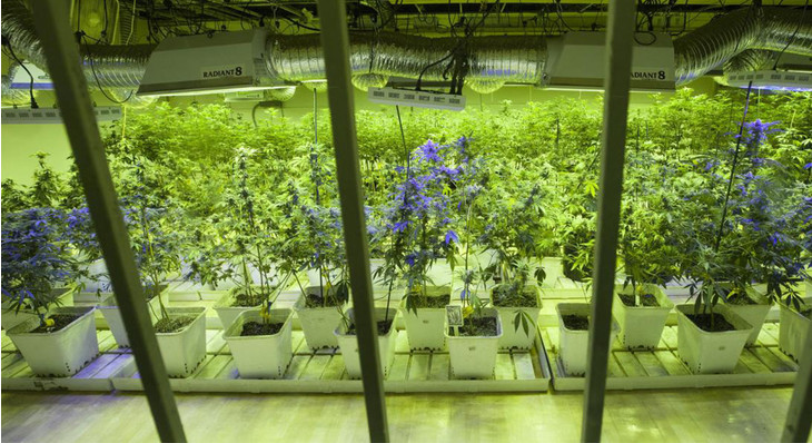 Northern Michigan University to Offer Comprehensive Degree Entirely Focused on Canna-business