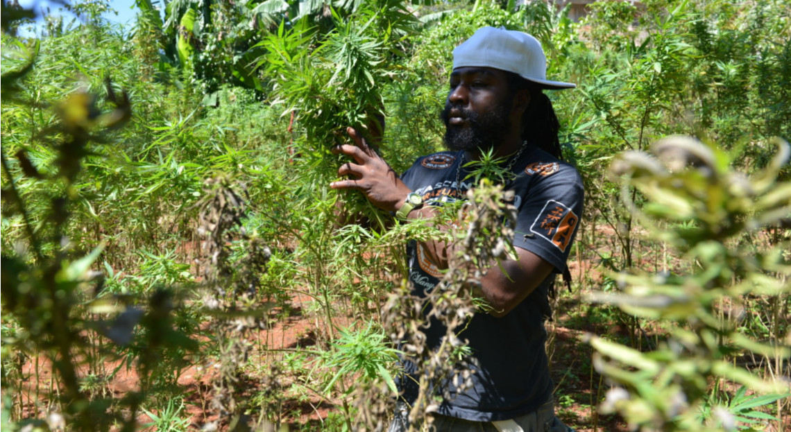 Jamaica Grants First Two Licenses to Medical Cannabis ...