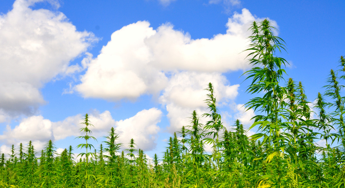 the hemp farming act of 2018 aims to legalize hemp