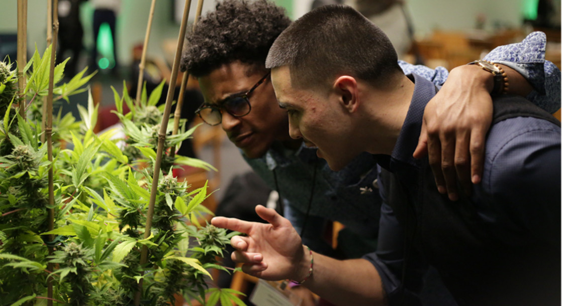 Higher Learning: Why Student Innovation Is Critical for Legal Cannabis