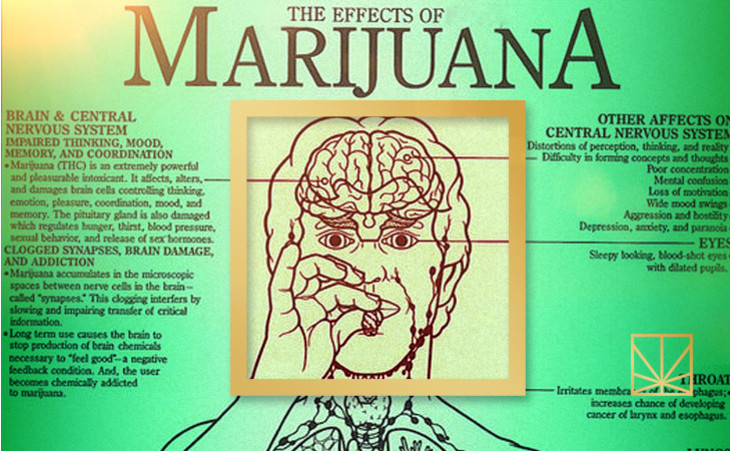 the effects of marijuana consumption on the human body - marijuana affects the whole body and one of the parts of the body that is affected by marijuana greatly is the human brain marijuana contains a lot of chemicals which contribute and are the cause of why it affects the body.