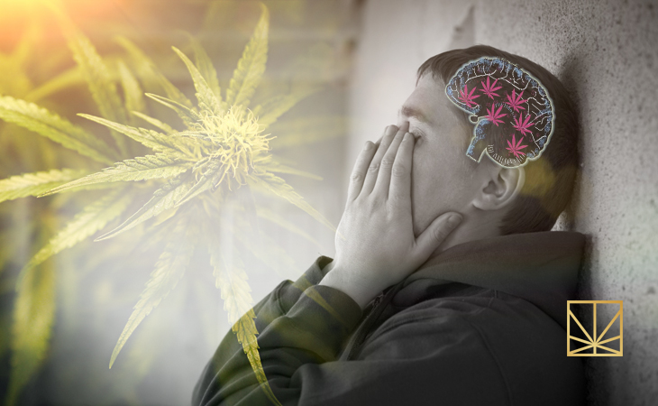 Debunking Cannabis Myths Pt Iv Marijuana Causes Schizophrenia Health
