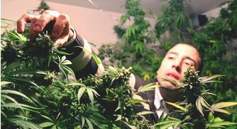 Uruguay Fears Legal Weed Sales Could Be Weak