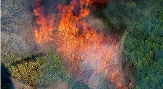 California Wildfire Endangers Cannabis Crops in Santa Cruz Mountains
