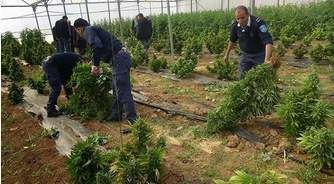 How Difficult Is It To Get Hashish In Palestine