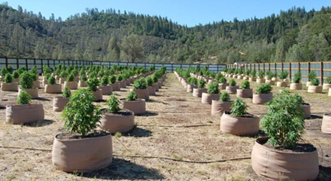 Meet the California Growers Who Want to Kick Cops Out of Policing Cannabis