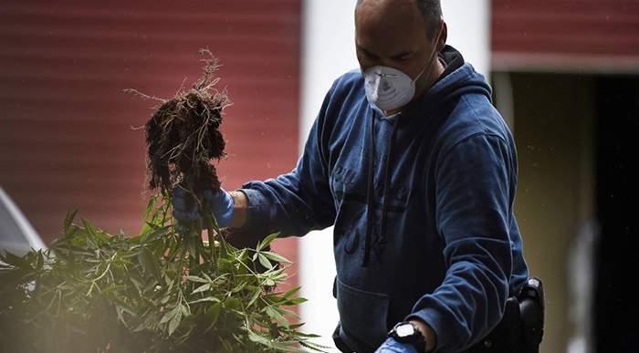 What Are California Marijuana Laws