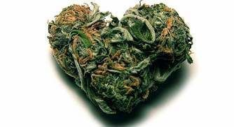 Can Marijuana Really Lead to a Broken Heart?