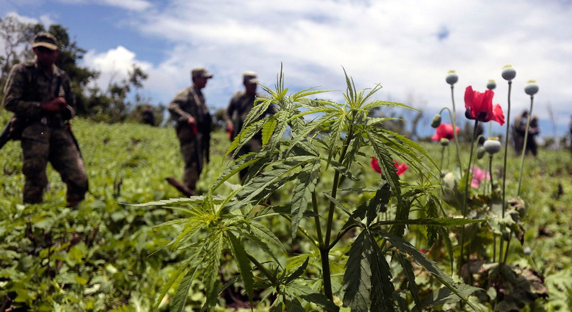 The Mexican Senate Passes Medical Cannabis Bill In Landslide 98-7 Vote