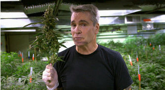 Henry Rollins Will Headline the 2017 International Cannabis Business Conference