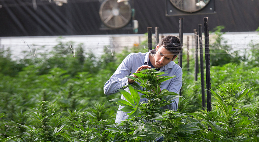 Israel Cannabis Research