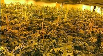 British Cops Raided a Nuclear Bunker and Found A Million Dollar Grow Op