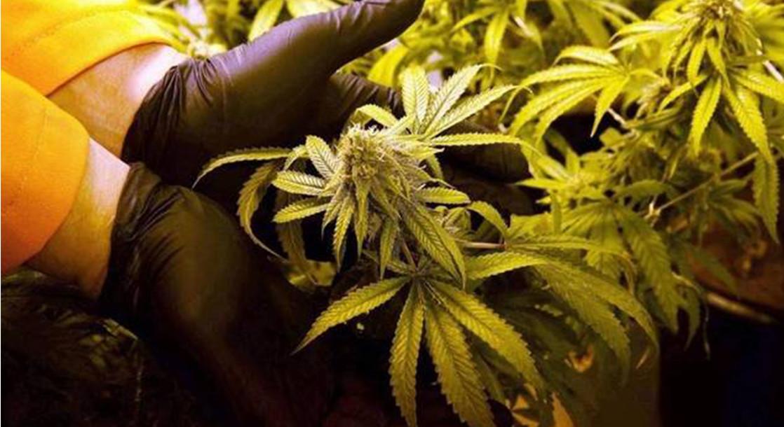 Broward County, Florida Postpones Implementing Medical Marijuana Regulations