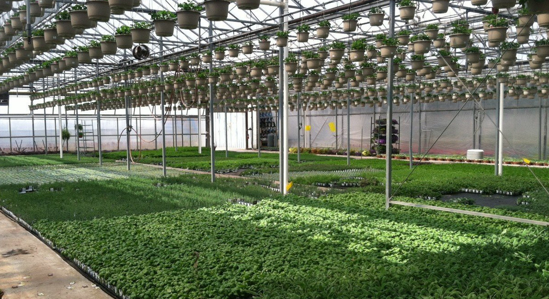 How Much Does It Really Cost to Start A Grow Operation?