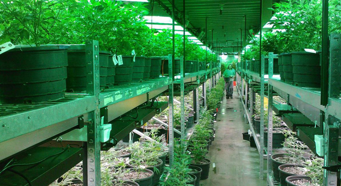 Big Business, Bad Crops: How to Protect the Integrity of the Marijuana Industry