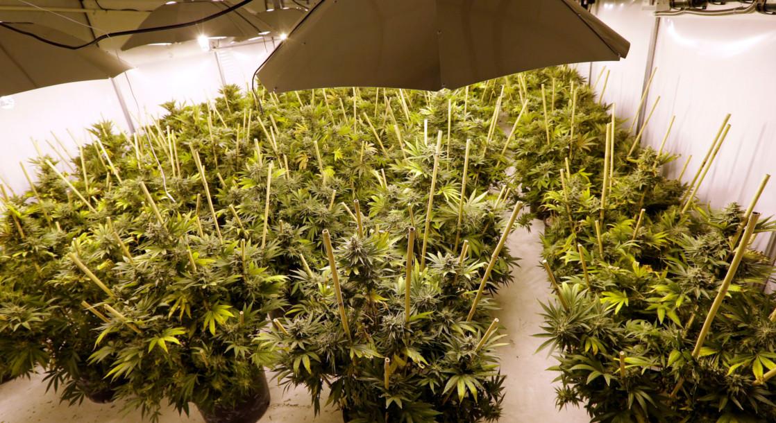 Philippine Legislators Advance Medical Marijuana Legalization Bill