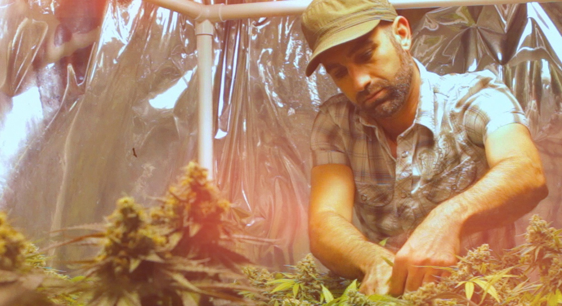 Seed to Strain Episode About Weed Strain SF Breath
