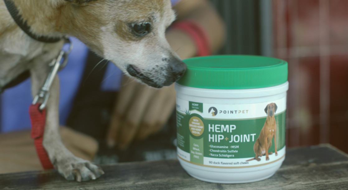 Cannabis for Canines? Vets and Pet Owners Talk Marijuana and Animal Health