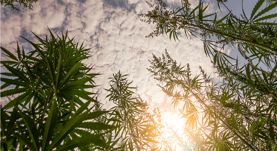 Weekly Weed News Roundup: NYC Argues Over Weed Taxes, MedMen Faces Class Action Lawsuit
