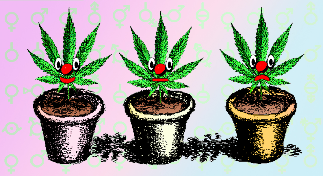 Does Transitioning Change the Way You Smoke Weed?