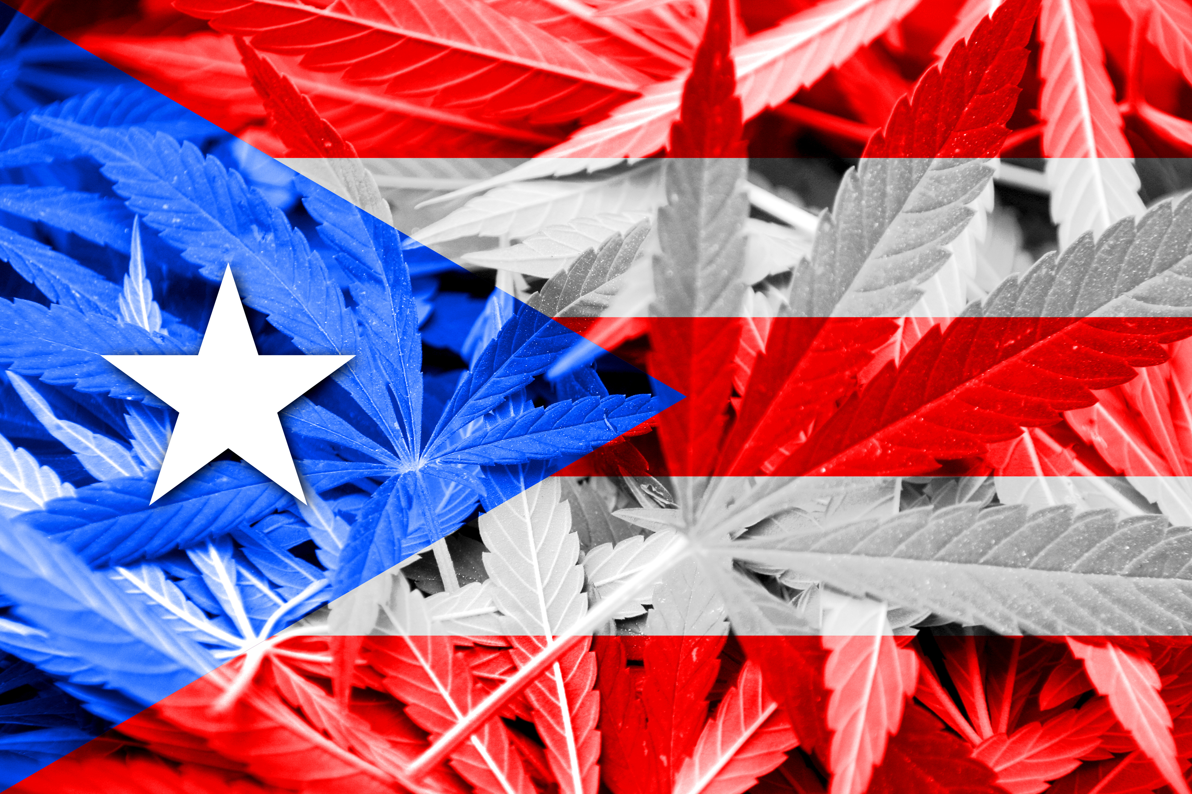 How Puerto Rico's Pot Shops Are Recovering After Hurricane Maria