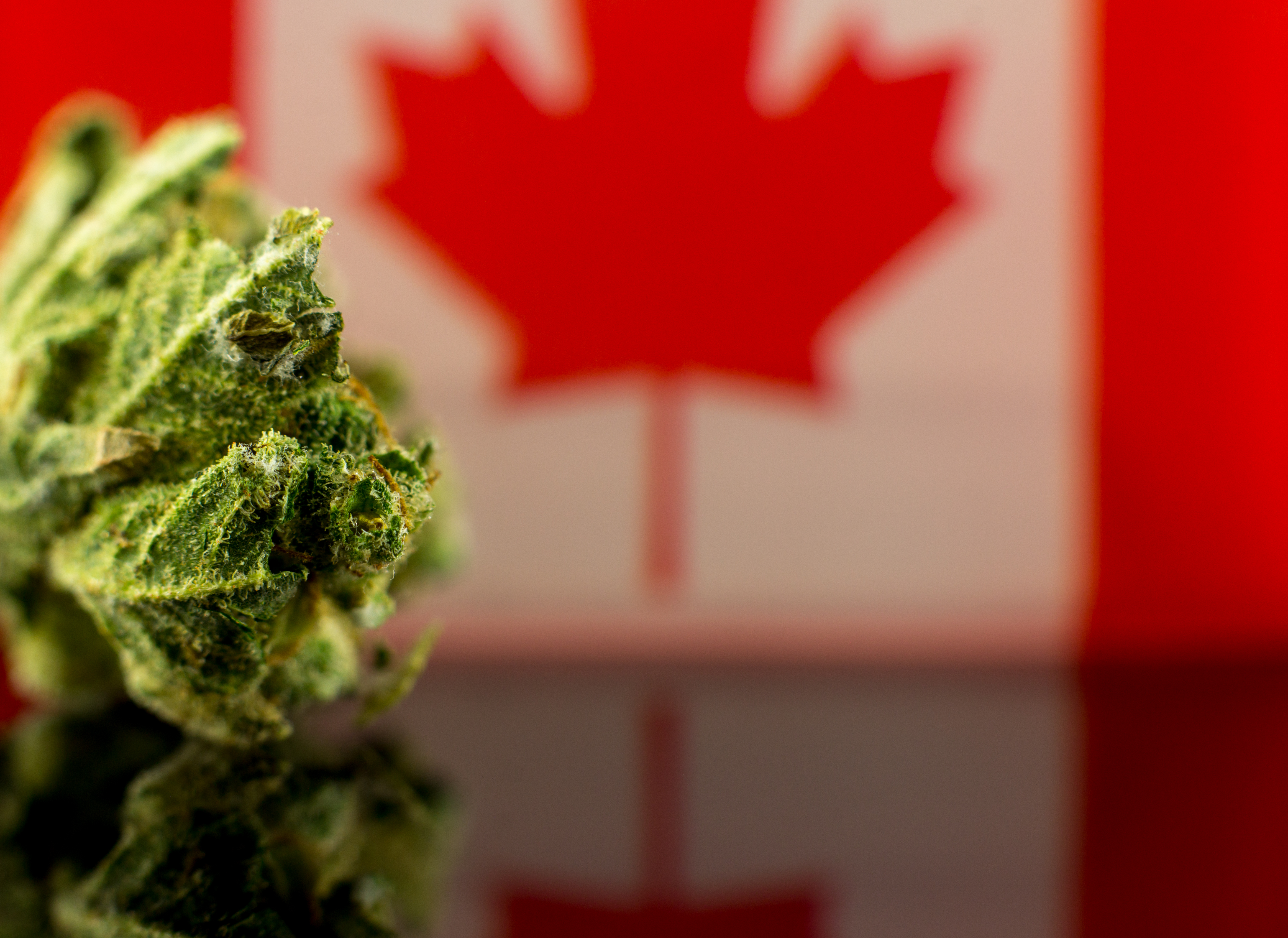 The Great Ontario Reefer Raffle: Why Canada's Biggest Province Has So Few Dispensaries