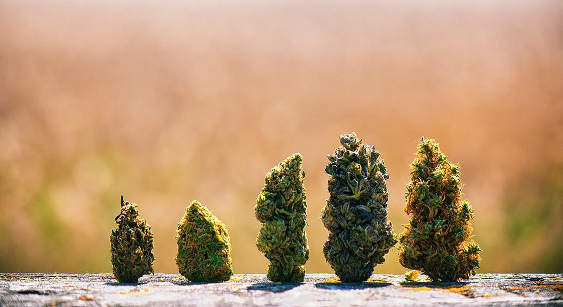 Jane Says: How Can We Destigmatize Cannabis?