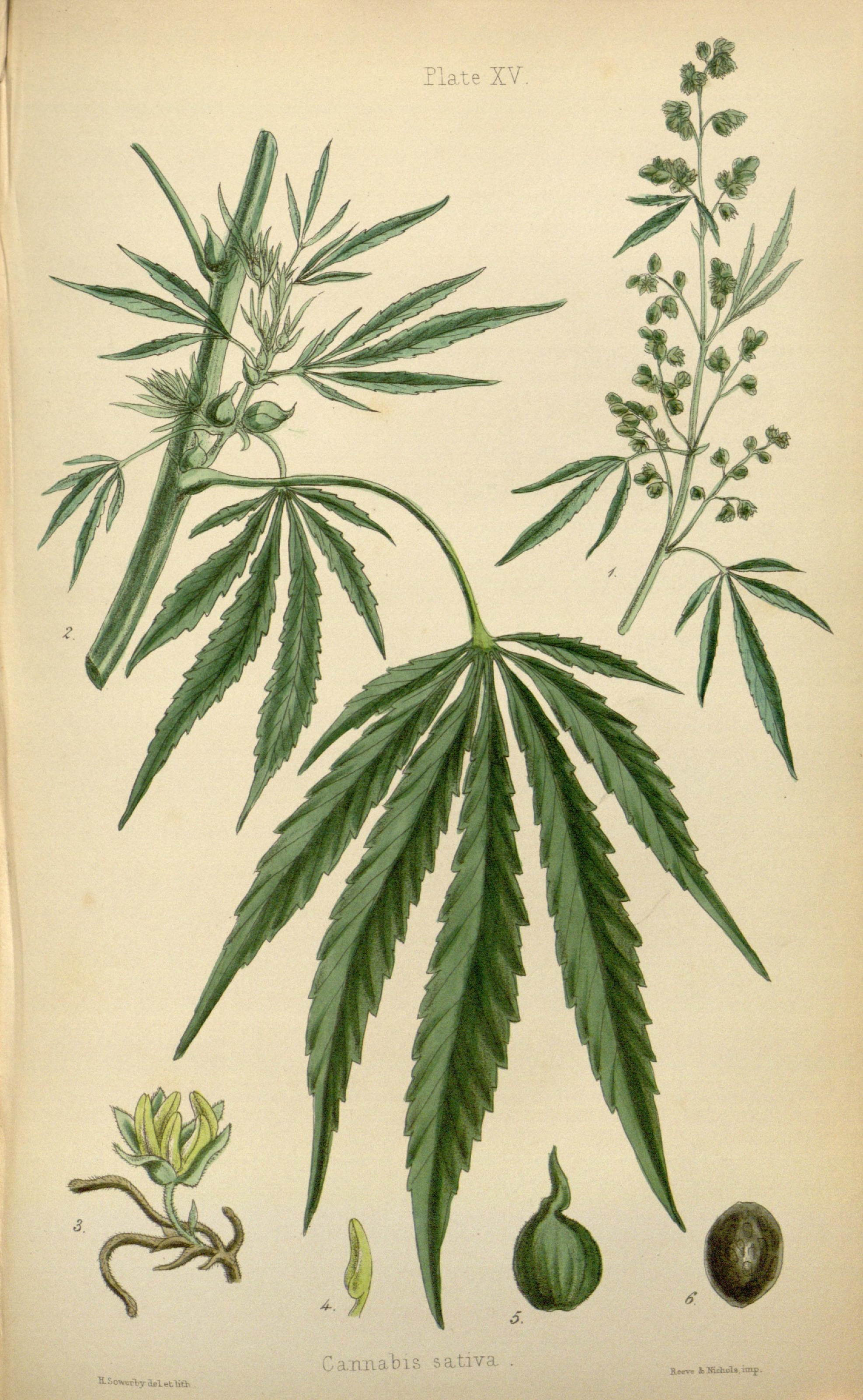 1551392879780_The_flora_homoeopathica_(8260577231).jpg