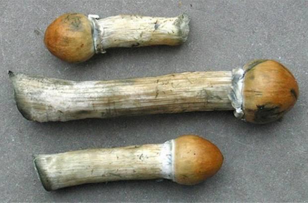 1557523757675_mushrooms.jpeg