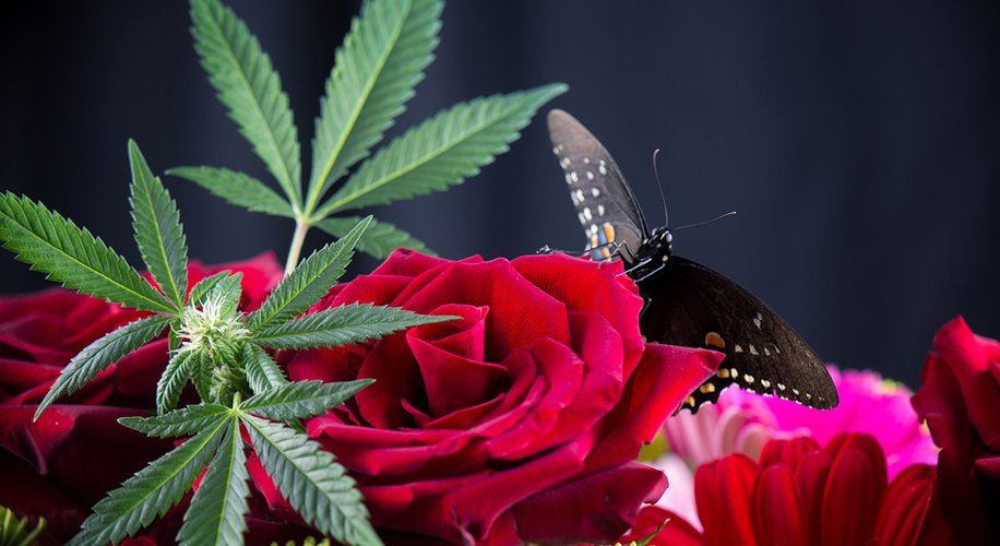 Mother's Day Gifts for Every Mom, From the Canna-Curious to the Super Stoner