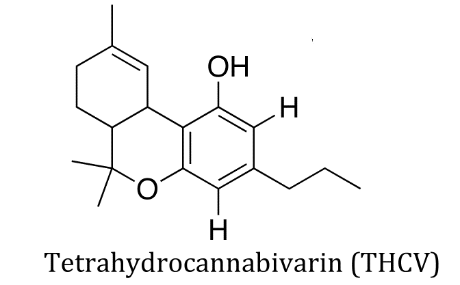 What Exactly Is THCV and What Does the Cannabinoid Do to You?