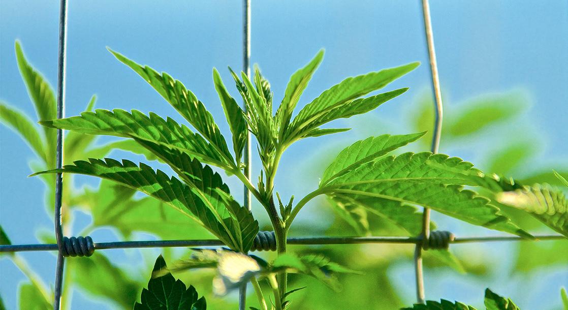 Washington, DC Just Banned Employment Discrimination Against Cannabis Consumers