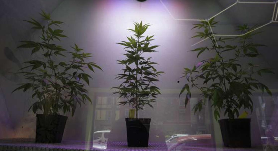 Bathroom Trap Door Leads Italian Police to Massive Cannabis Grow