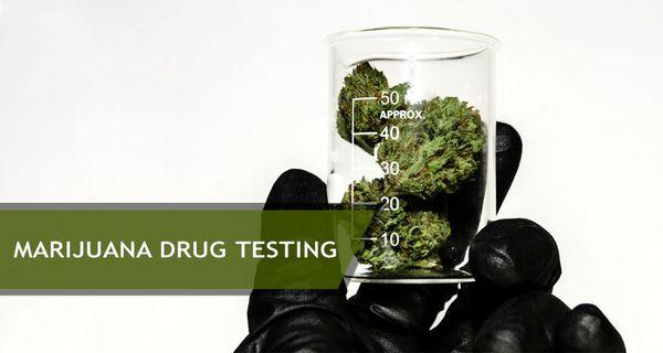 1570477753167_alt=MarijuanaDrugTesting.jpg